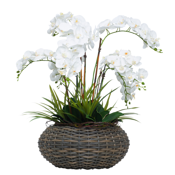 White Phalaenopsis in Wash Basket