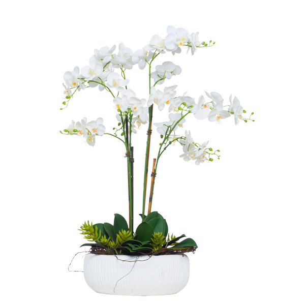 White Phalaenopsis/Succulent in White Bowl