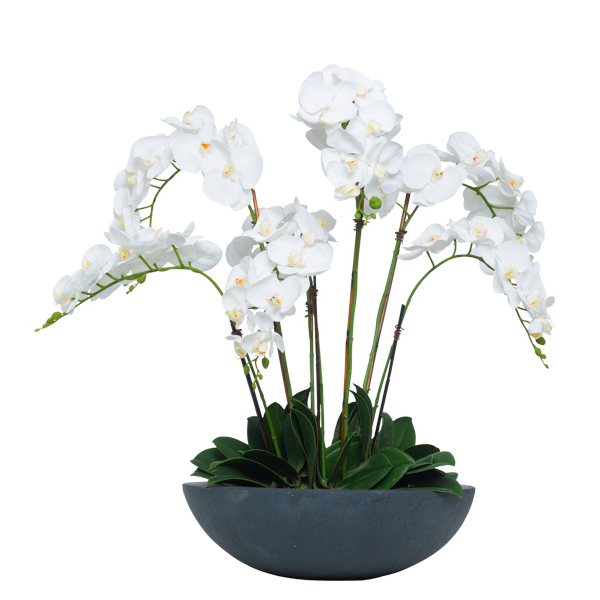 White Phalaenopsis in Lg. Black Bowl