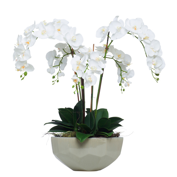 White Phalaenopsis in Faceted Bowl