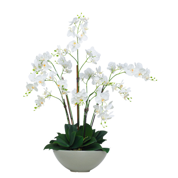 White Phalaenopsis in Grey Bowl