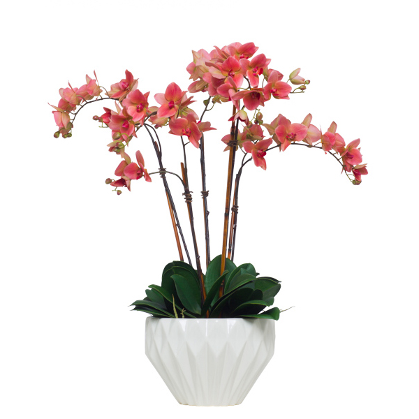 Coral Phalaenopsis in White Copped Bowl