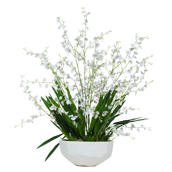 White Oncidium in Faceted Bowl