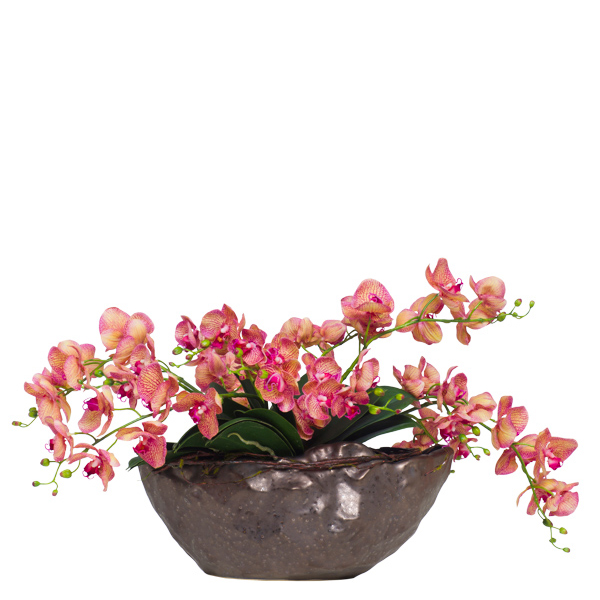 Variegated Phalaenopsis in Copper Boiling Pot