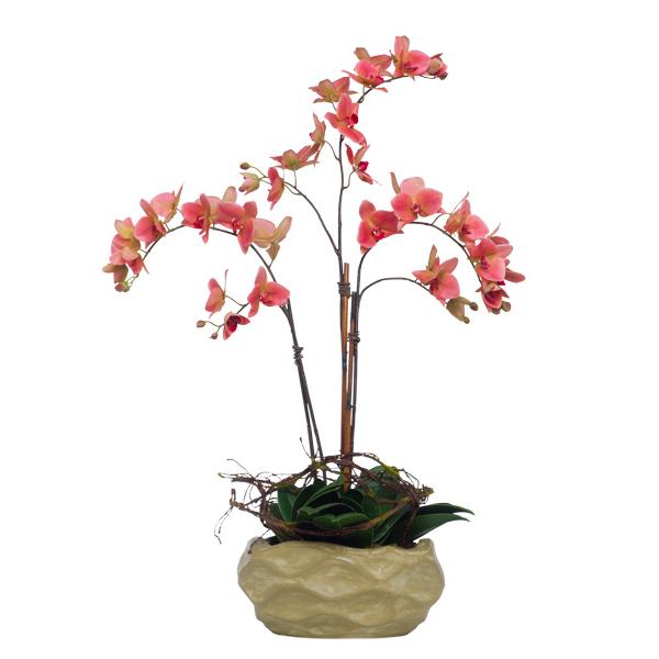 Coral Phalaenopsis in Wavy Bowl