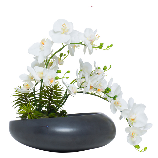 White Phalaenopsis in Moon Bowl