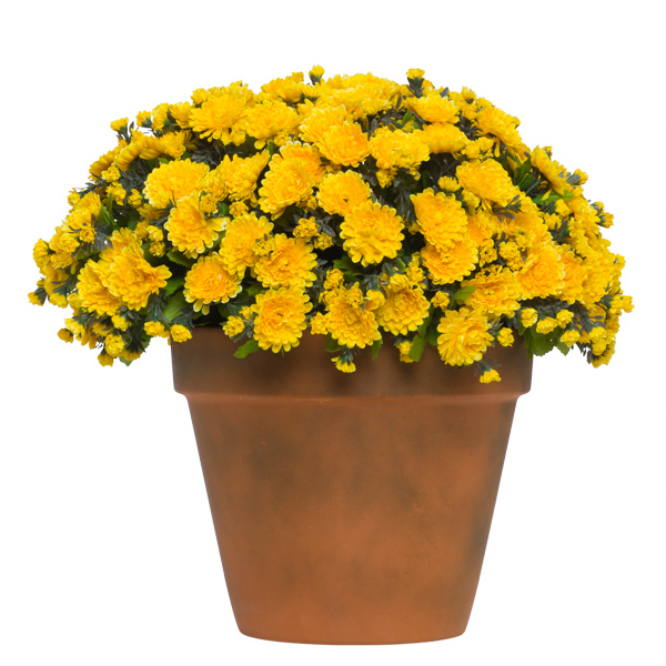 Lg. Yellow Mum Pot