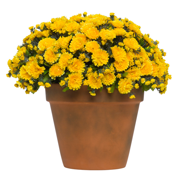 Yellow Mum Pot