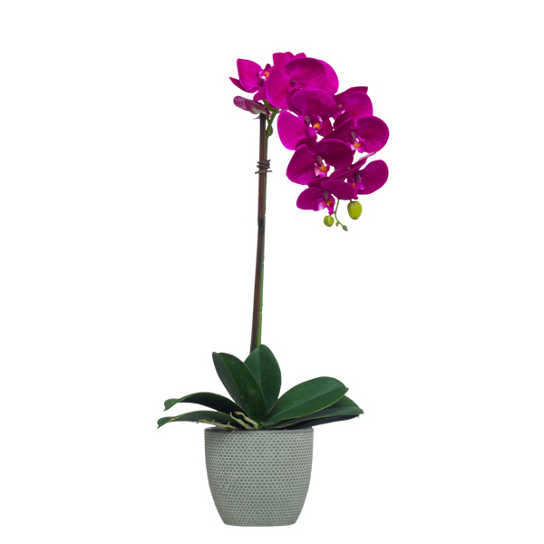 Single Fuchsia Phalaenopsis in Grey Pot
