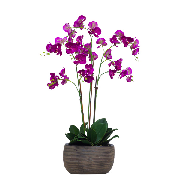 Fuchsia Phalaenopsis in Brown TC Bowl