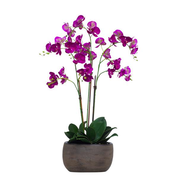 Fuchsia Phalaenopsis in Brown TC Bowl