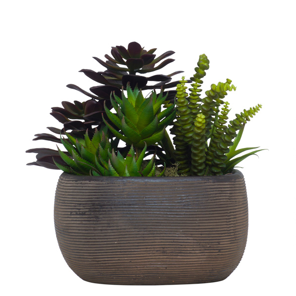 Succulents in TC Square Brown Bowl