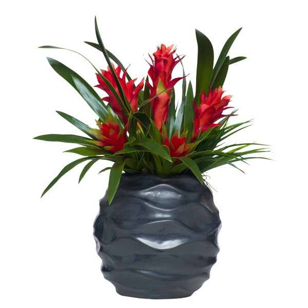 Red Bromeliad & Tropical in Tall Wavy Black Pot