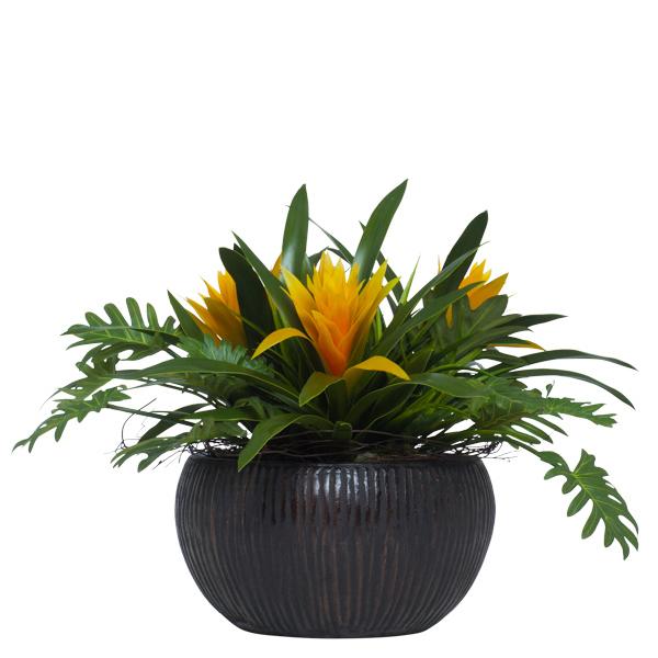Bromeliad/Split Leaf in Bowl