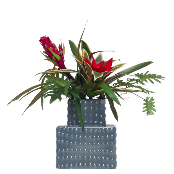 Bromeliad in Grey Tower Vase
