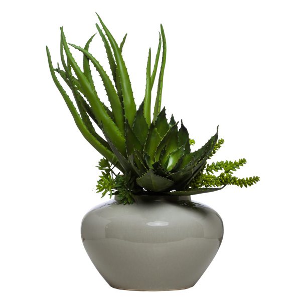 Aloe in Shellish Grey Urn