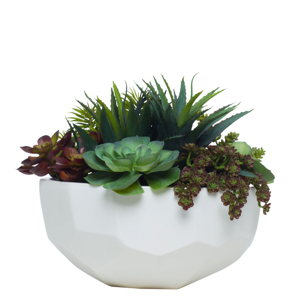 Mixed Succulents in Feceted Bowl