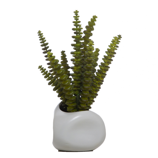 Tall Succulent in White Pot