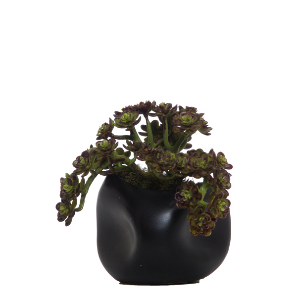 Mini Hens Succulent in Black Dent Pot