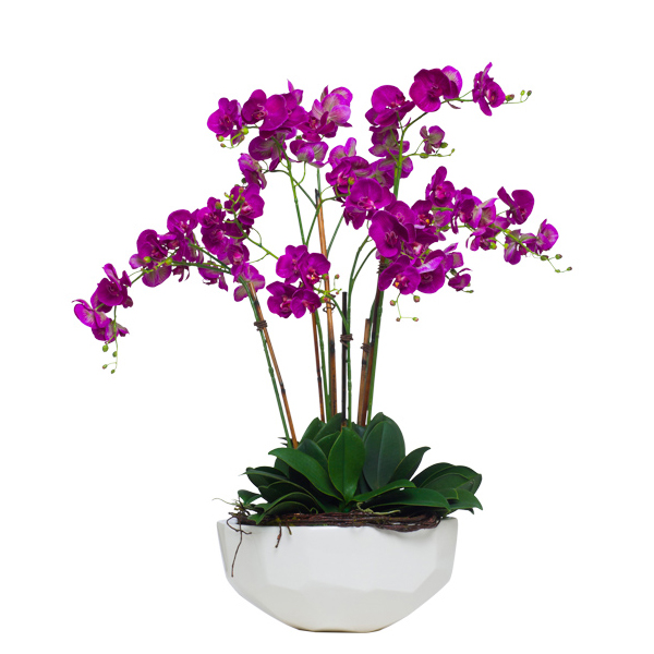 Fuchsia Wild Phalaenopsis in Faceted Bowl