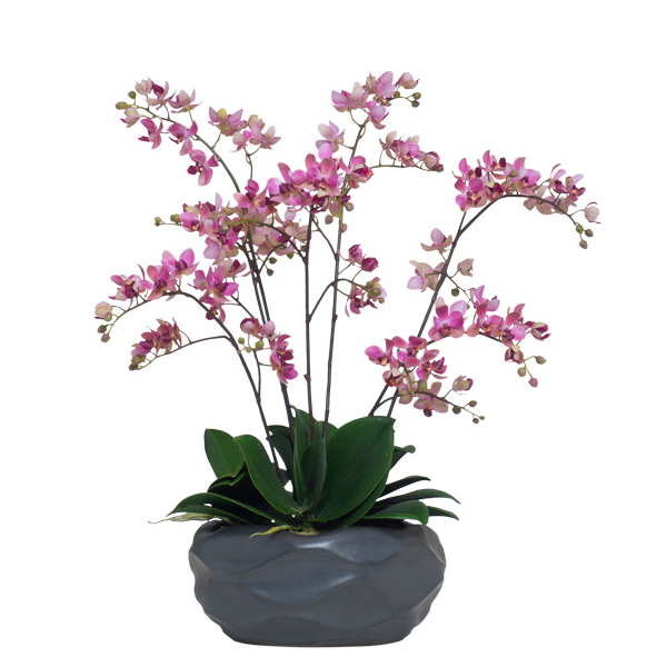 Mini Lavender Phalaenopsis in Black Wavy Bowl