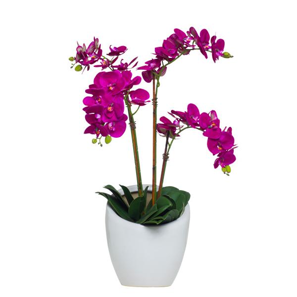 Fuchsia Phalaenopsis in Slant White Vase
