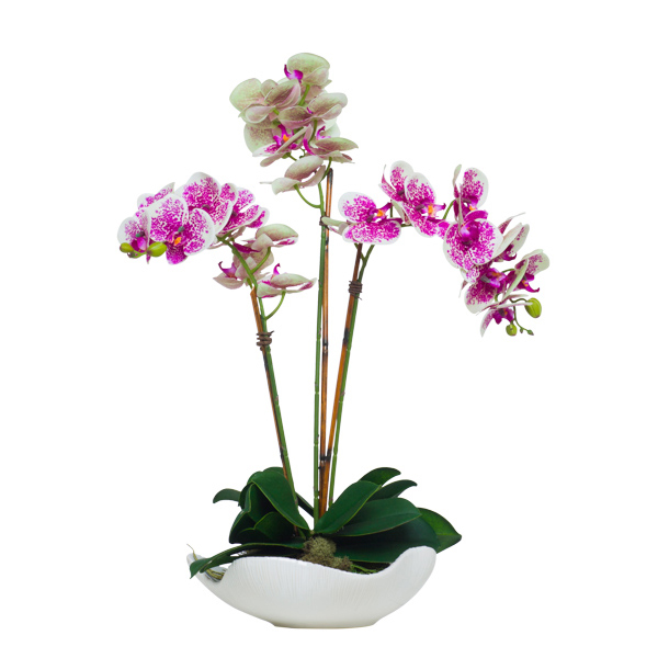Triple Cream/Fuchsia Phalaenopsis in Wavy Bowl