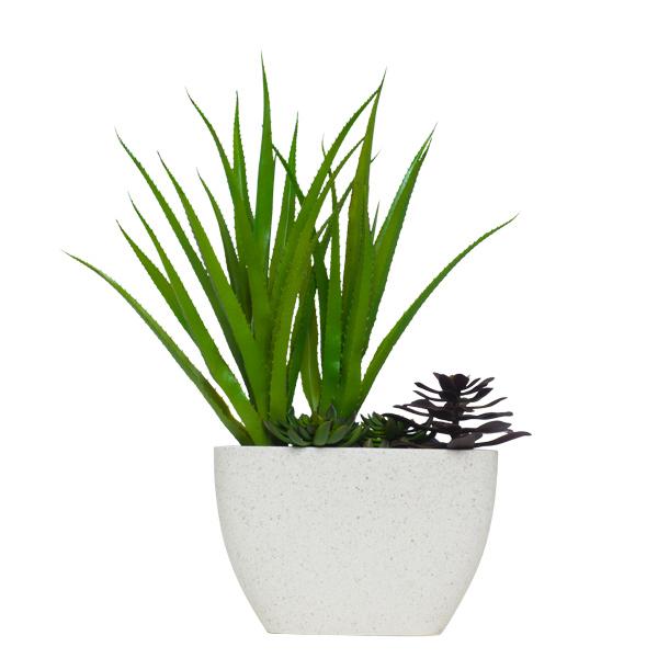 Pandanus/Succulent in Terrazzo Pot