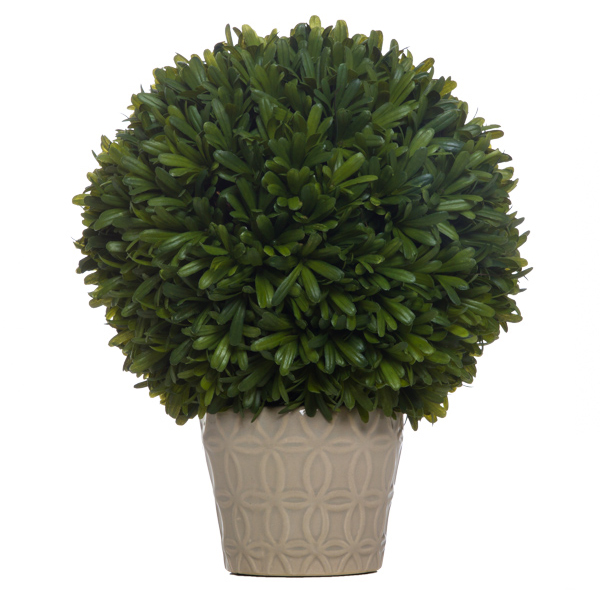 Podocarpus Ball in Insigna Grey Container (Currently Not Available)