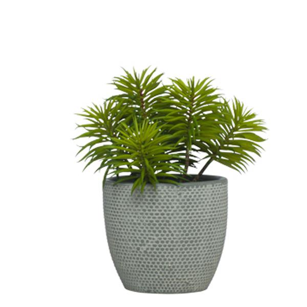 Succulent in TC Grey Container