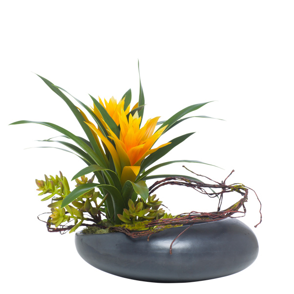 Bromeliad/Succulent in Moon Bowl