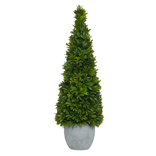 Podocarpus in Concrete Container - OUT of STOCK
