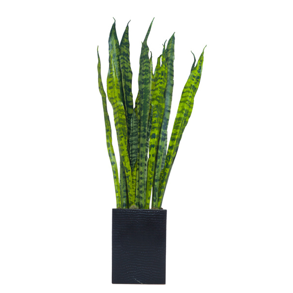 Snake Plant in Tall Black Rectangle