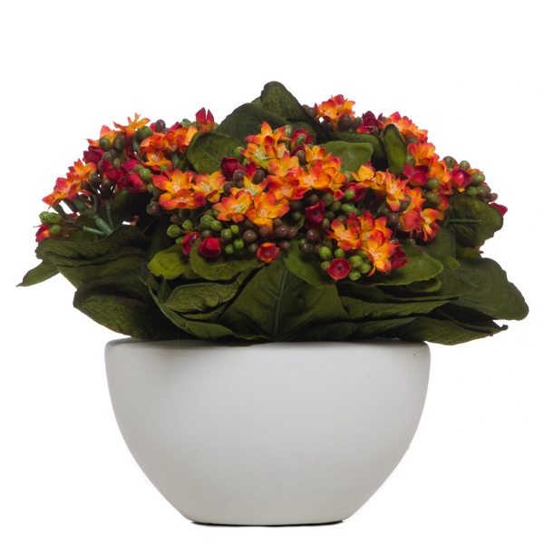 Kalanchoe in White Pot Orange