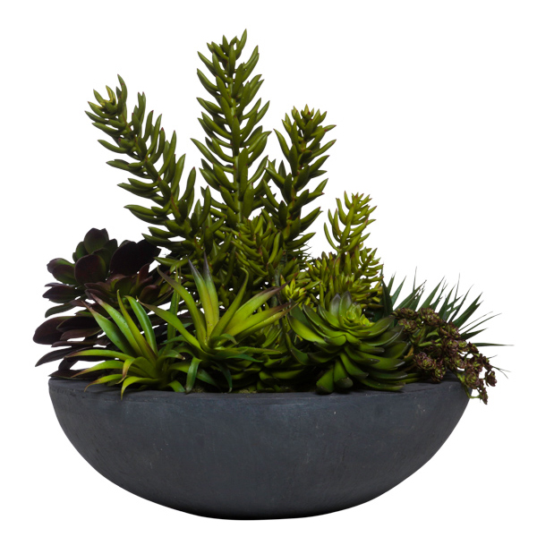 Succulents in Large Black Bowl