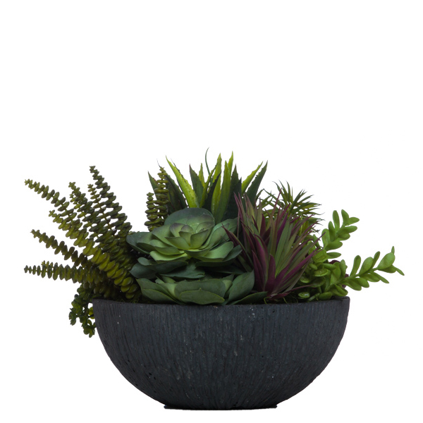 Succulents in Black Bowl
