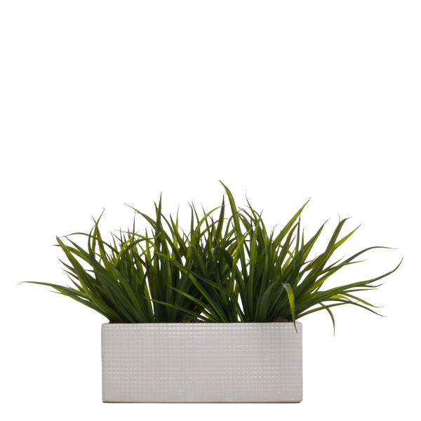 Grass in White Rectangle Container