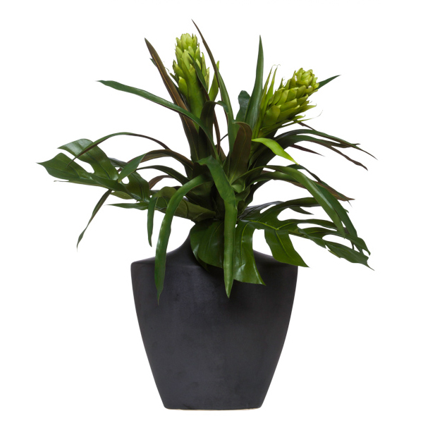 Bromeliad/Selloum in Black Vase