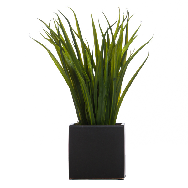 Grass in Black Cube