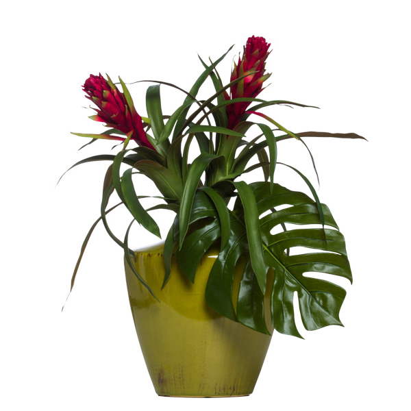Bromeliad in Avocado Vase