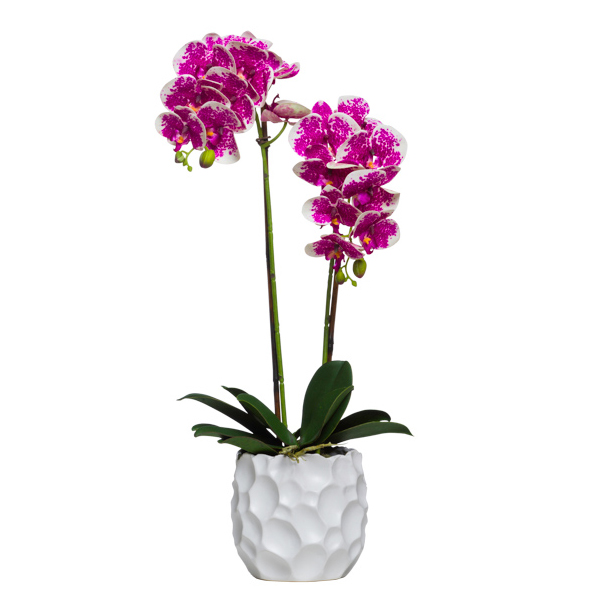 Double Phalaenopsis in White Golf Ball Container
