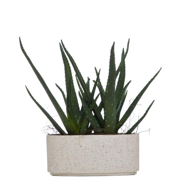 Large Aloe in White Oval Terrazzo