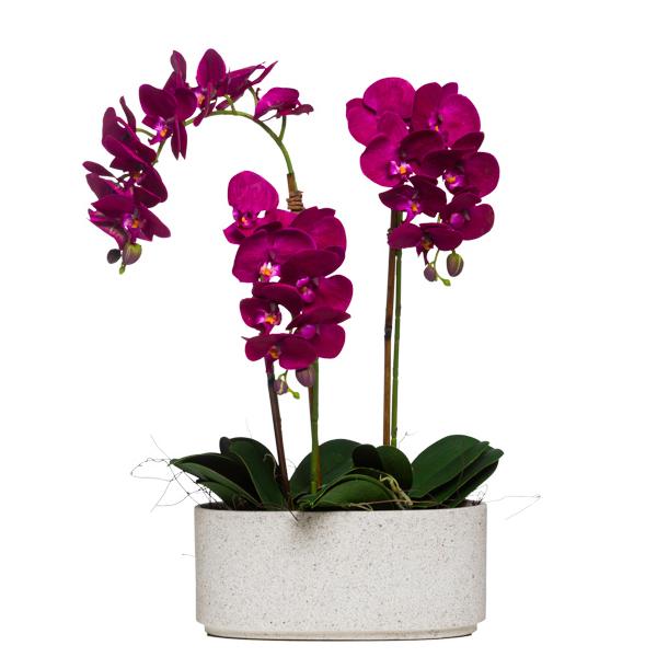 Triple Fuchsia Phalaenopsis in Oval Terrazzo Pot