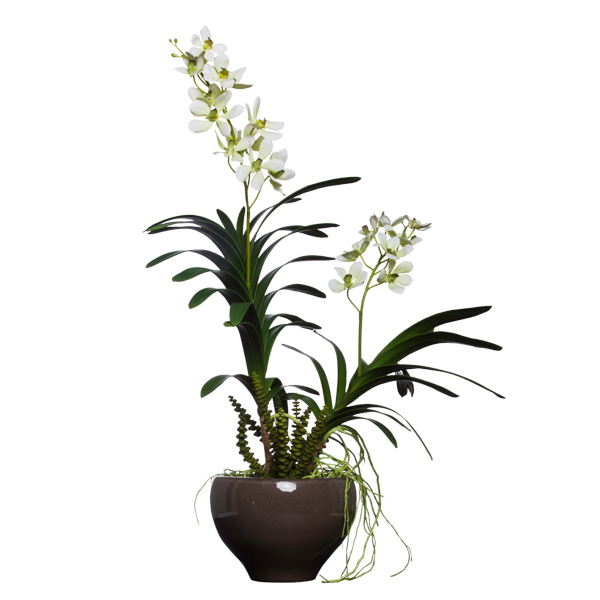 Vanda in Lg. Flared Bowl