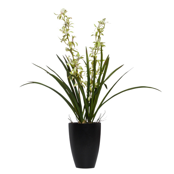 Green Mini Cymbidium in Black Cylinder