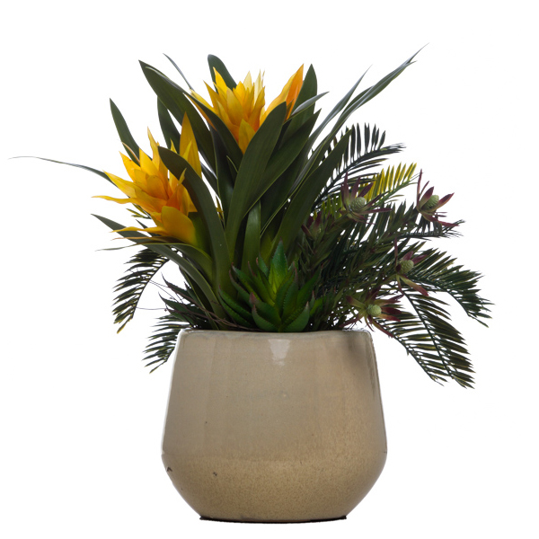 Bromeliad/Cycas in Cream Round Pot