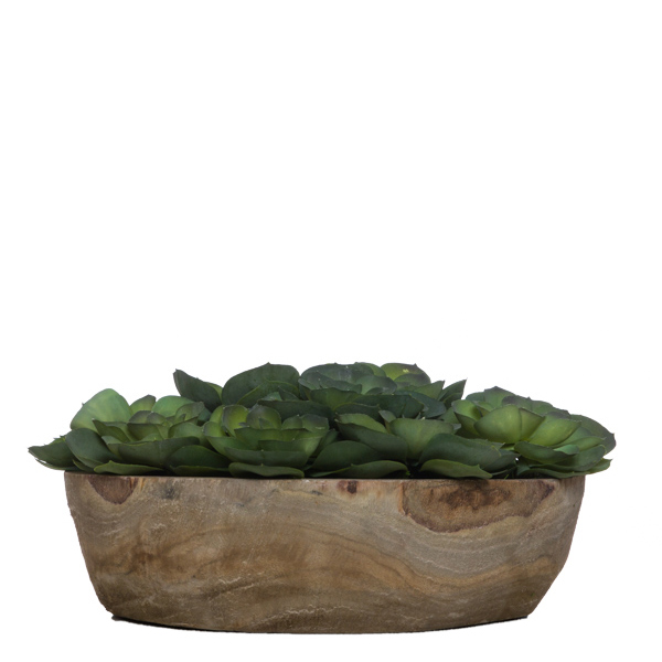 Echeveria in Grey Tone Bowl