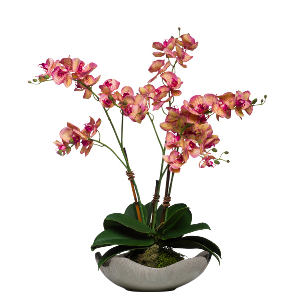 Wild Orchid in Wavy Bowl