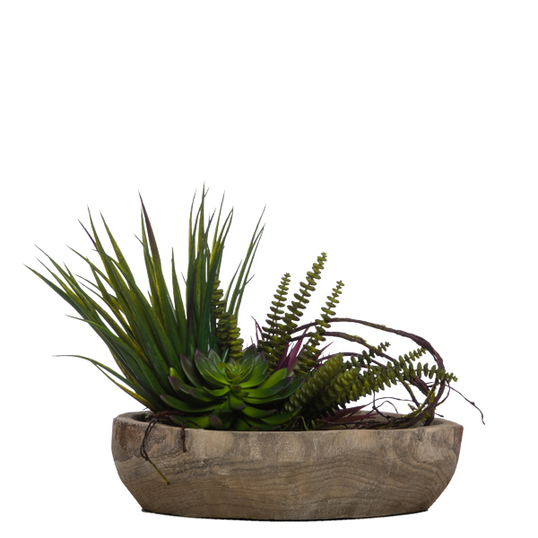 Succulents in Wooden Plate