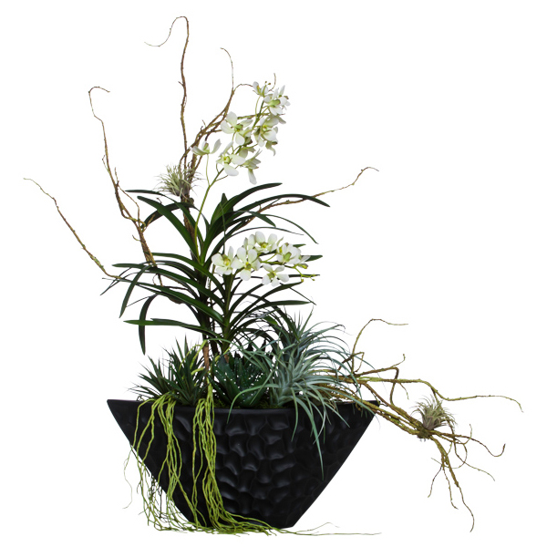 Vanda/Succulents in Oval Bowl